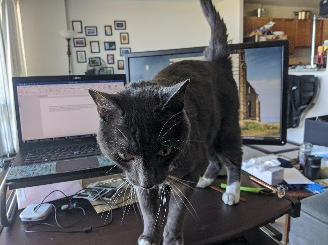 A cat sitting on top of a desk  Description automatically generated