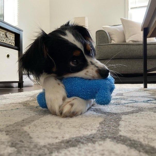 A dog lying on a rug  Description automatically generated